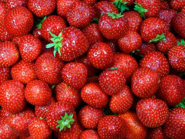 Everything You Need to Know About Harry's Berries, the Strawberries With a Cult Following